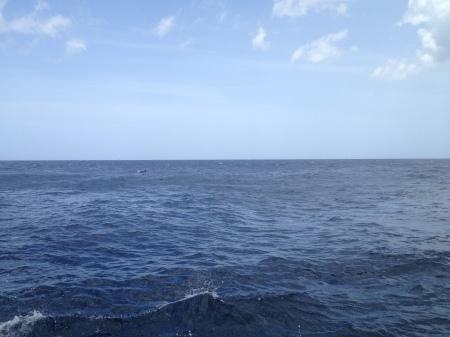 zoek de dolfijnen